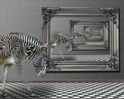 zebra-1332743_960_720.jpg