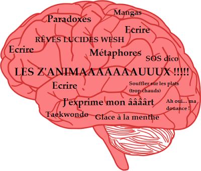cerveau 1.png